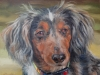 painting of long hair dachsund