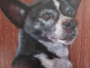 Chihuahua dog painting