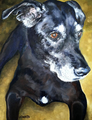Custom dog portrait in oils by Lisa LaTourette